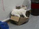 Katzen-Home