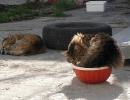 Katzenwinter