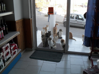 Kein Einlass für Katzen